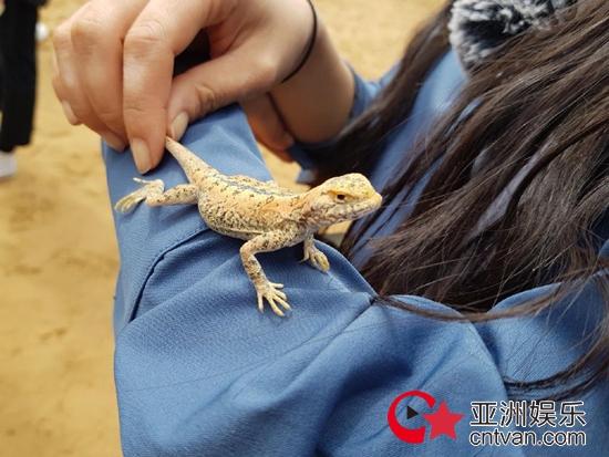 程潇胆量惊人,满沙漠找蜥蜴乐在其中