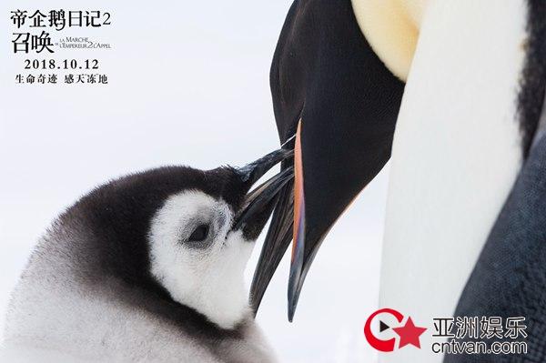 """《帝企鹅日记2》今日上映发特辑 """"自来水""""张歆艺狂喊袁弘带娃"""