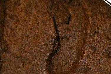 最古老人类脚印  可追溯到1.56万年前