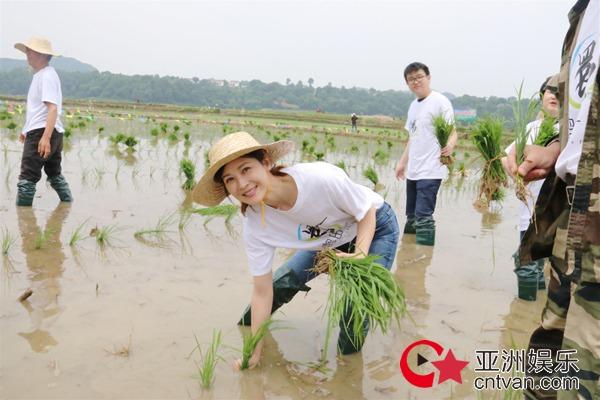 童蕾插秧开启秦岭公益之行 身体力行呼吁大众关注公益环保