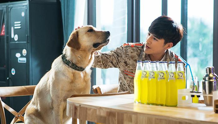 《神犬小七3》见证演员的姜潮成长