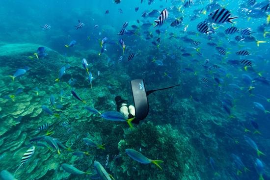 余晚晚徜徉海底世界倡议环保  世界海洋日引领时尚行业创新
