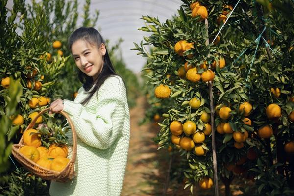 《希望的田野》黄圣依穿薄荷绿毛衣 果园摘椪柑似邻家少女